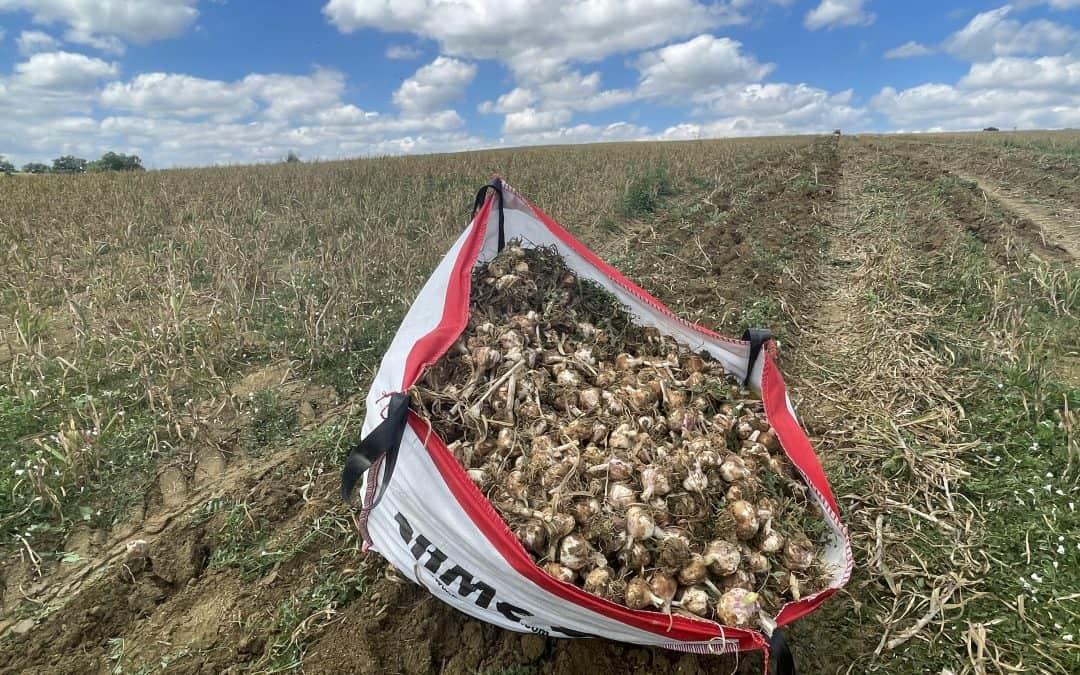 Notre nouvelle vidéo de la récolte de l'ail français disponible !